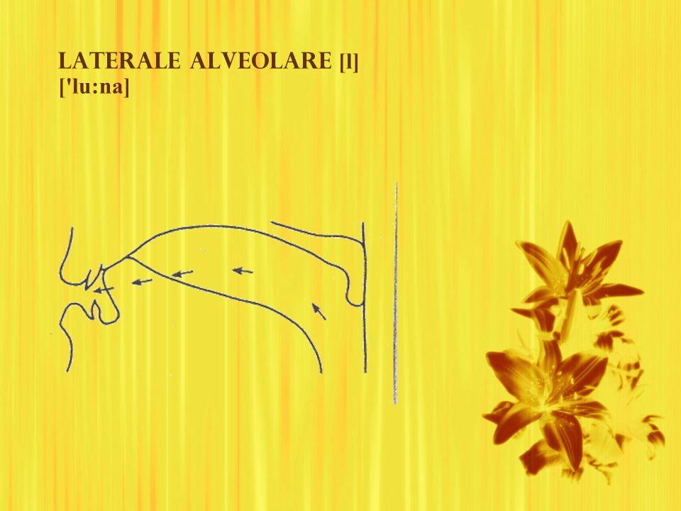 Laterale alveolare [l] [ lu:na]